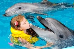 Плавання з дельфінами + фото (A4) 10хв